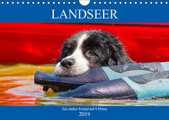 Landseer – Ein starker Freund auf 4 Pfoten (Wandkalender 2019 DIN A4 quer) von Starick,  Sigrid