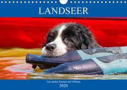 Landseer – Ein starker Freund auf 4 Pfoten (Wandkalender 2020 DIN A4 quer) von Starick,  Sigrid