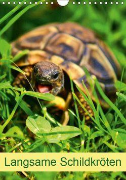 Langsame Schildkröten (Wandkalender 2019 DIN A4 hoch) von kattobello