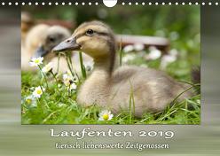 Laufenten – tierisch liebenswerte Zeitgenossen (Wandkalender 2019 DIN A4 quer) von Storm,  Wiebke