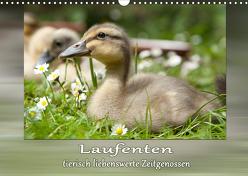 Laufenten – tierisch liebenswerte Zeitgenossen (Wandkalender 2020 DIN A3 quer) von Storm,  Wiebke