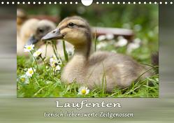Laufenten – tierisch liebenswerte Zeitgenossen (Wandkalender 2020 DIN A4 quer) von Storm,  Wiebke