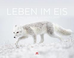 Leben im Eis – Tiere am Polarkreis 2020
