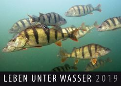 Leben unter Wasser 2019 von Quelle & Meyer Verlag