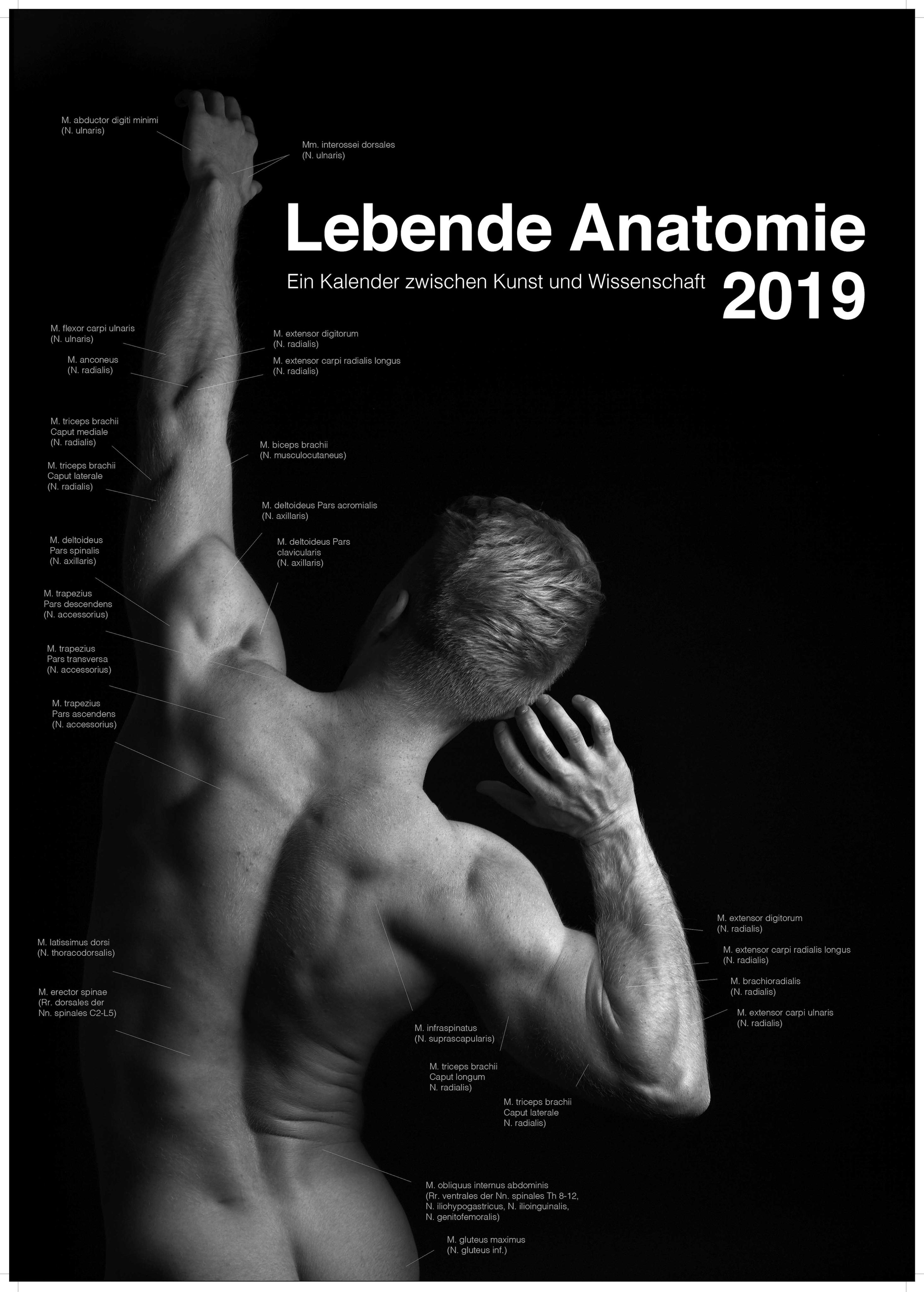 Lebende Anatomie 2019 von Valentin, Sophie, Voigtländer, Sten Hannes:
