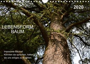 Lebensform Baum (Wandkalender 2020 DIN A4 quer) von Gaudig,  Marlise