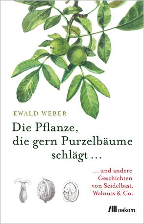 Lebensmodell Pflanze von Weber,  Ewald