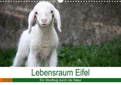 Lebensraum Eifel (Wandkalender 2020 DIN A3 quer) von Knoden,  Elke