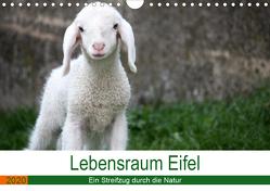Lebensraum Eifel (Wandkalender 2020 DIN A4 quer) von Knoden,  Elke