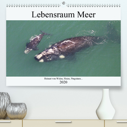 Lebensraum Meer – Heimat von Walen, Haien, Pinguinen… (Premium, hochwertiger DIN A2 Wandkalender 2020, Kunstdruck in Hochglanz) von und Yvonne Herzog,  Michael