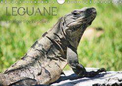 Leguane – Einzigartige Reptilien (Wandkalender 2019 DIN A4 quer) von Hornecker,  Frank