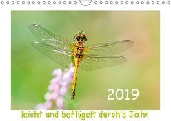 leicht und beflügelt durch´s Jahr 2019 (Wandkalender 2019 DIN A4 quer) von Beyer (Moqui),  Daniela