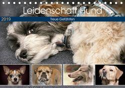 Leidenschaft Hund (Tischkalender 2019 DIN A5 quer) von Metternich,  Doris