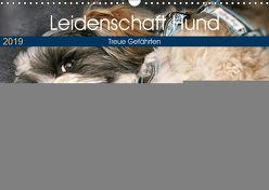 Leidenschaft Hund (Wandkalender 2019 DIN A3 quer) von Metternich,  Doris