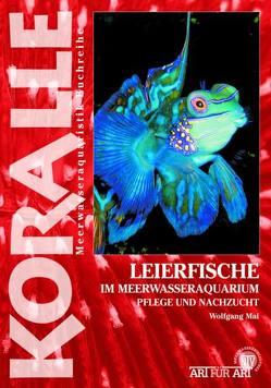 Leierfische im Meerwasseraquarium von Mai,  Wolfgang