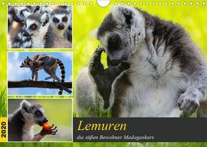 Lemuren die süßen Bewohner Madagaskars (Wandkalender 2020 DIN A4 quer) von Riedel,  Tanja