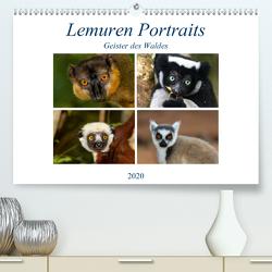 Lemuren Portraits (Premium, hochwertiger DIN A2 Wandkalender 2020, Kunstdruck in Hochglanz) von Markolf,  Matthias