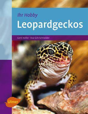 Leopardgeckos von Keller,  Gerti, Schneider,  Eva-Grit