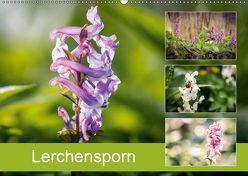 Lerchensporn (Wandkalender 2019 DIN A2 quer) von Rasche,  Marlen