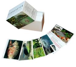 Lernkarten von Bayrle,  Hermann, Heintges,  Wolfgang