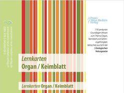 Lernkarten Organ / Keimblatt von Stoll,  Ursula