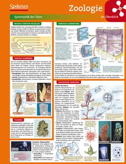 Lerntafel: Zoologie im Überblick