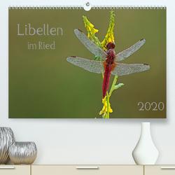 Libellen im Ried (Premium, hochwertiger DIN A2 Wandkalender 2020, Kunstdruck in Hochglanz) von Oldani,  Dorothea