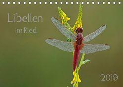 Libellen im Ried (Tischkalender 2019 DIN A5 quer) von Oldani,  Dorothea