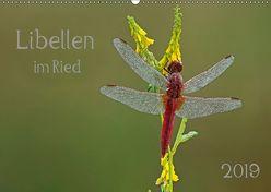 Libellen im Ried (Wandkalender 2019 DIN A2 quer)