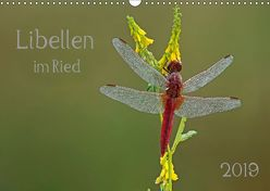 Libellen im Ried (Wandkalender 2019 DIN A3 quer) von Oldani,  Dorothea