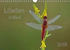 Libellen im Ried (Wandkalender 2019 DIN A4 quer) von Oldani,  Dorothea