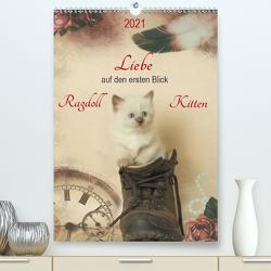 Liebe auf den ersten Blick . Ragdoll Kitten (Premium, hochwertiger DIN A2 Wandkalender 2021, Kunstdruck in Hochglanz) von Reiß-Seibert,  Marion