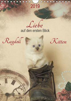 Liebe auf den ersten Blick . Ragdoll Kitten (Wandkalender 2019 DIN A4 hoch) von Reiß-Seibert,  Marion