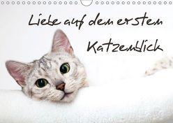 Liebe auf den ersten Katzenblick (Wandkalender 2019 DIN A4 quer) von Enderlein - Bethari Bengals,  Sylke