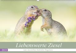 Liebenswerte Ziesel – vom Aussterben bedrohte Nagetiere (Wandkalender 2019 DIN A2 quer) von Petzl,  Perdita