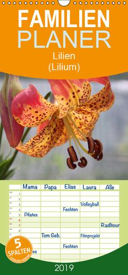 Lilien (Lilium) – Familienplaner hoch (Wandkalender 2019 , 21 cm x 45 cm, hoch) von Lantzsch,  Katrin