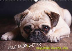 Lillie Mopsgetier – mopsfidel durchs Jahr (Wandkalender 2019 DIN A3 quer) von Raab,  Martina