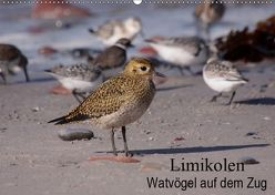Limikolen Watvögel auf dem Zug (Wandkalender 2019 DIN A2 quer) von Erlwein,  Winfried
