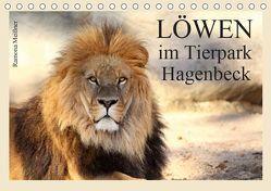 Löwen im Tierpark Hagenbeck (Tischkalender 2019 DIN A5 quer)