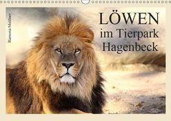 Löwen im Tierpark Hagenbeck (Wandkalender 2019 DIN A3 quer) von Meißner,  Ramona
