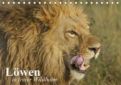 Löwen in freier Wildbahn (Tischkalender 2019 DIN A5 quer) von Stanzer,  Elisabeth