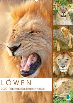 Löwen: prächtige Raubkatzen (Premium, hochwertiger DIN A2 Wandkalender 2020, Kunstdruck in Hochglanz) von CALVENDO