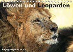 Löwen und Leoparden – Begegnungen in Afrika (Tischkalender 2019 DIN A5 quer)