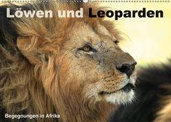 Löwen und Leoparden – Begegnungen in Afrika (Wandkalender 2018 DIN A2 quer) von Herzog,  Michael