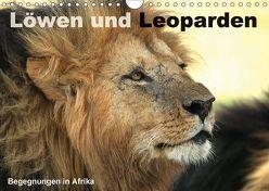 Löwen und Leoparden – Begegnungen in Afrika (Wandkalender 2018 DIN A4 quer) von Herzog,  Michael