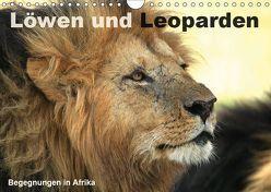 Löwen und Leoparden – Begegnungen in Afrika (Wandkalender 2019 DIN A4 quer)