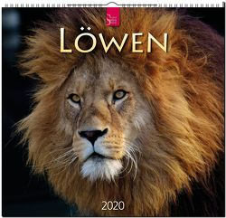 Löwen von Redaktion Verlagshaus Würzburg,  Bildagentur