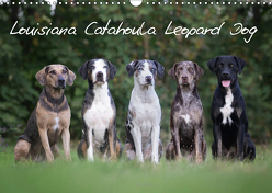 Lousiana Catahoula Leopard (Wandkalender 2019 DIN A3 quer) von on Tour,  Catahouligan