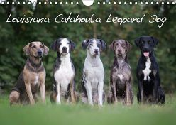 Lousiana Catahoula Leopard (Wandkalender 2019 DIN A4 quer) von on Tour,  Catahouligan