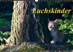 Luchskinder (Wandkalender 2019 DIN A3 quer) von Martin,  Wilfried